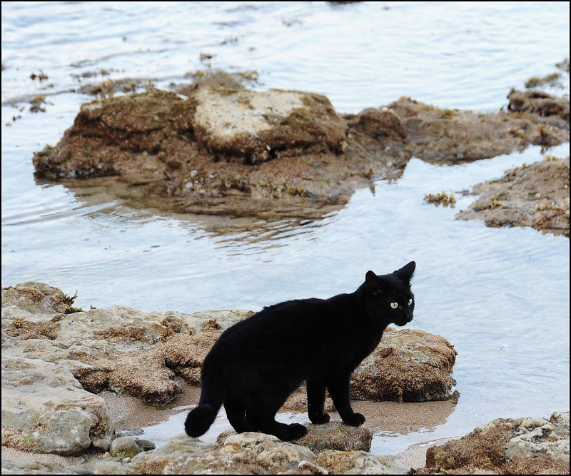 cats-fishing-su-pallosu-2