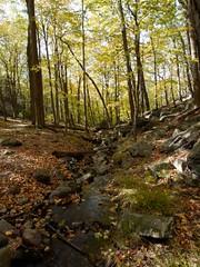 日, 2010-10-17 12:49 - Bald MountainからRamapo-Dundergerg Trailを南下