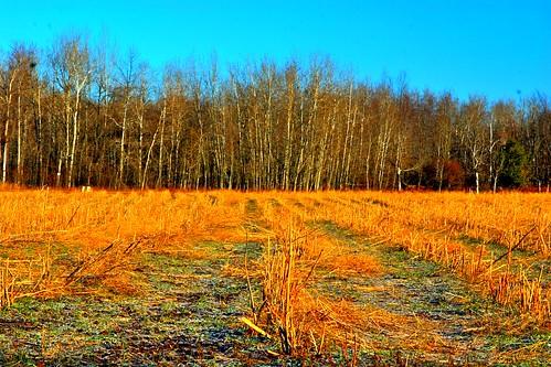 westernmichigan midmichigan michigan oceana county usa midwest asparagus research sunset sunrise twilight moonrise january 2012 okemos hart equipment forest moss stream ice warm winter