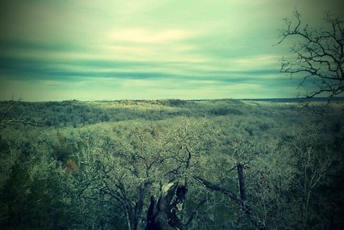 cameraphone park trees nature texas view tx vista mckinney bastrop roughs mckinneyroughs lcra fxcamera