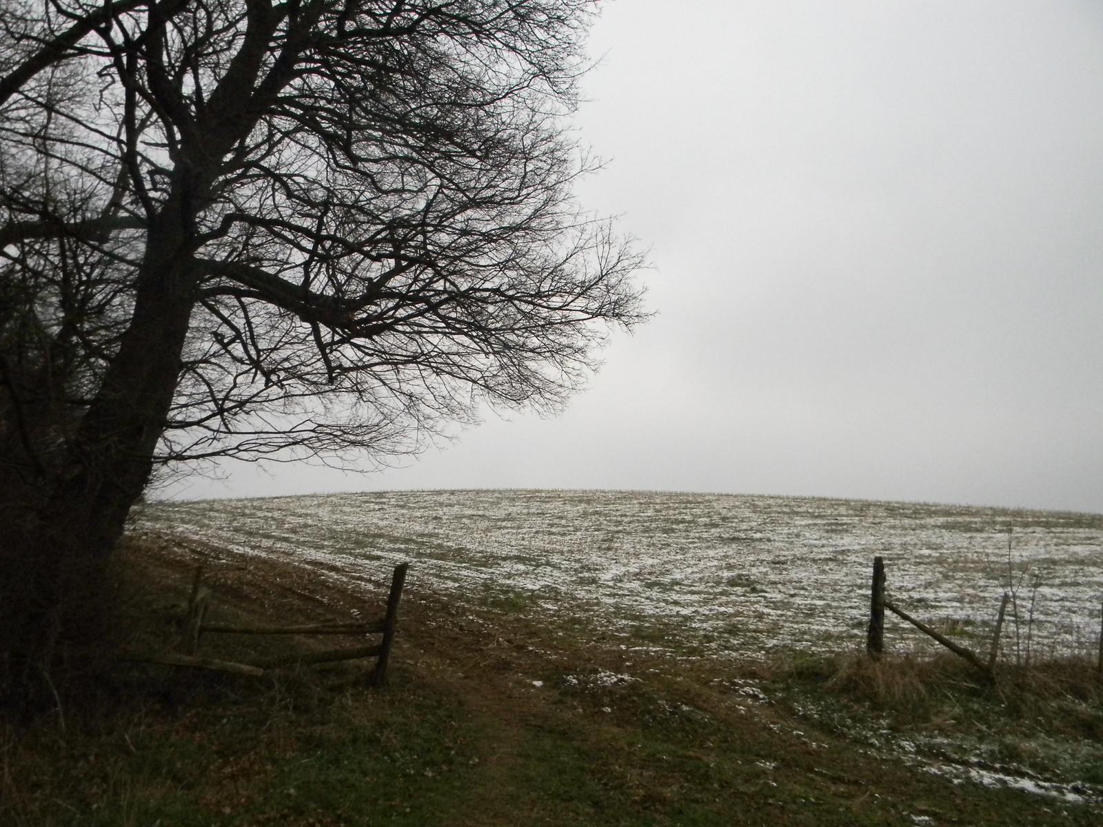 Snowy field Eynsford Circular