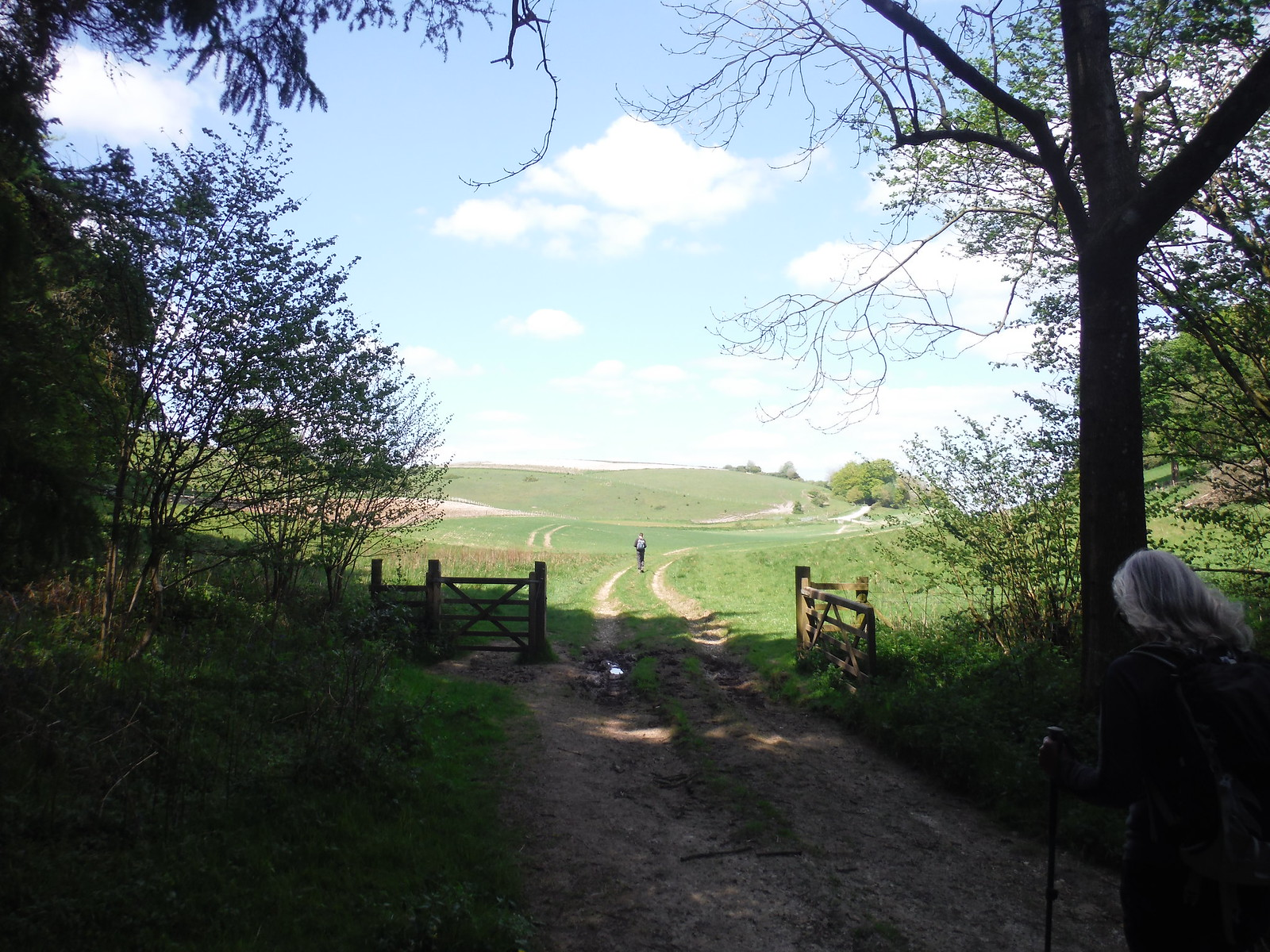 Emerging from Germanleith Copse Valley SWC Walk Rowlands Castle Circular - Extension