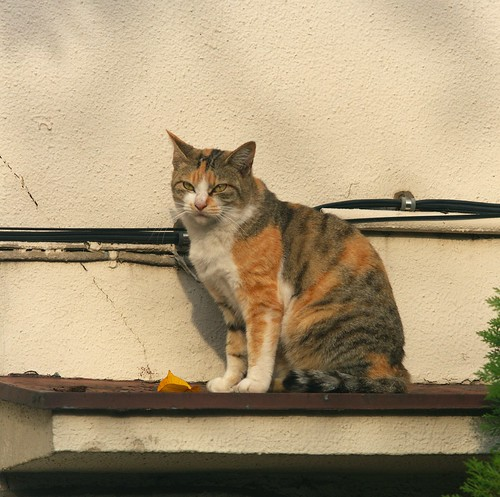 Cat on roof | by taiyofj