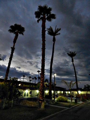 california trees pool hotel inn desert motel palm economy indio economyinn