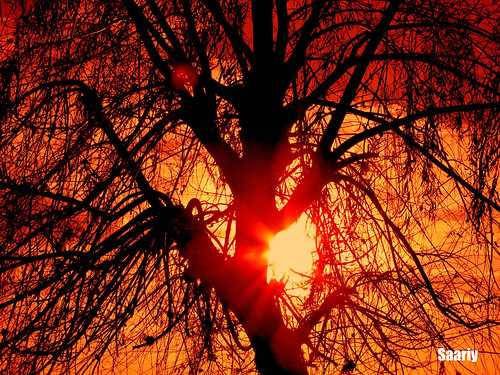 sunset branches supershot saariy saariysqualitypictures