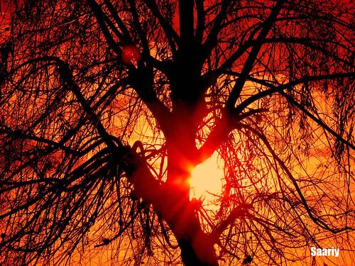 sunset branches supershot saariy saariysqualitypictures