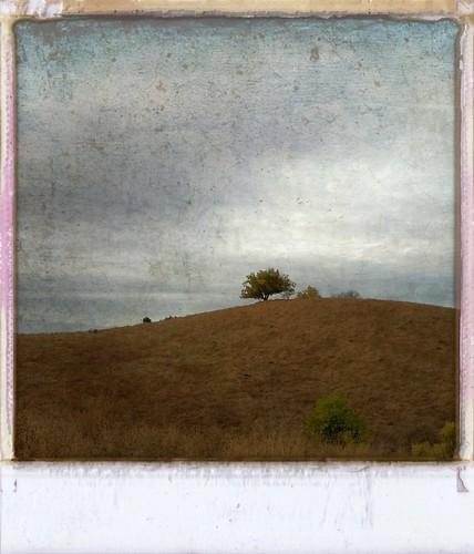 tree lone fremontolder curtbianchi iphone4 lomob irisphotosuite
