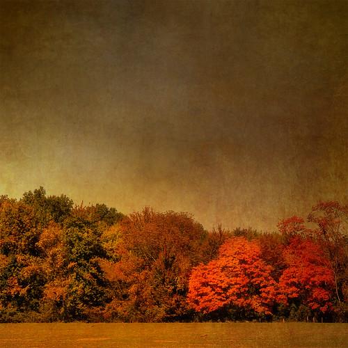 autumn trees ohio sky plants usa brown tree fall texture nature leaves landscape leaf artistic background grunge textures loveland backgrounds moosebite jrgoodwin
