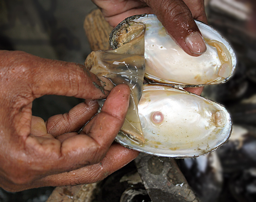 Pearl Farming | Pearl farming is the industry responsible fo… | Flickr