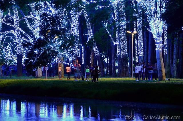 Natal Iluminado de São Paulo - Fonte do Parque Ibirapuera