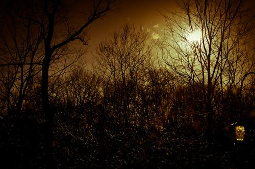 winter sky sun tree wet against rain sepia dark nikon bright nikkor brilliant 18200mmlens d7000 truebritgal
