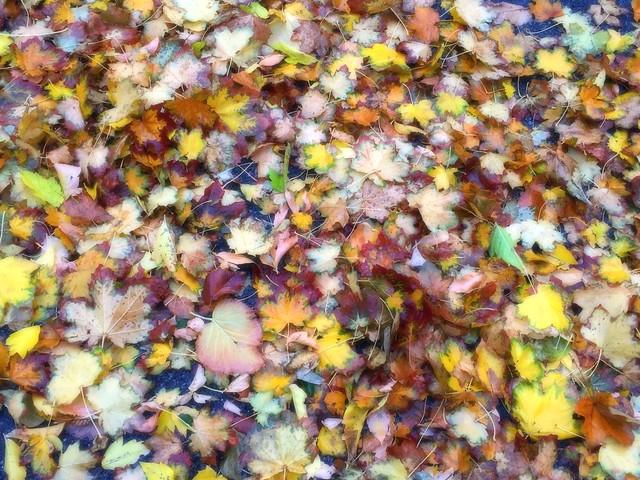 1 Moist Mix of Fall Foliage