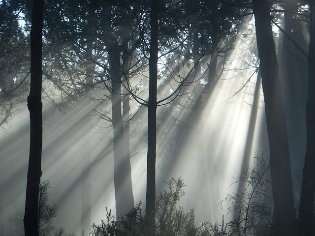 Rays and magic in the forest