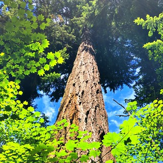 Stanley Park Big Trees Hike | by keepitsurreal