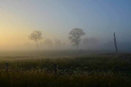 morning mist fog sunrise landscape dawn countryside foggy australia nsw fields northernrivers morninglandscape keerrong teraniacreekvalley pinchinroad