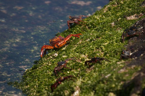 Crabs to the water | by Andrew Turner