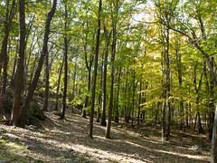 日, 2010-10-17 11:23 - Cornell Mine Trail