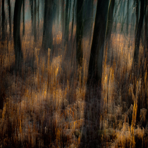 d5000 icm nikon abstract blur forest hellernaturecenter intentionalcameramovement motion movement noahbw square trees winter woods explored painterly