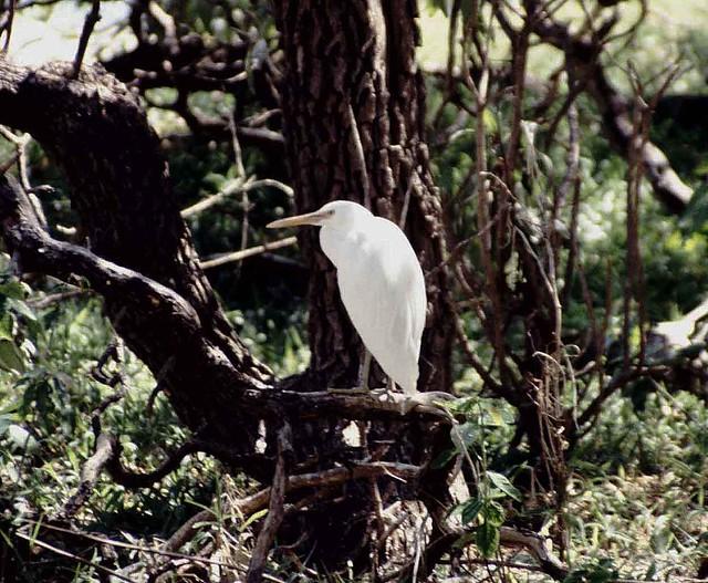 Heron island - heron