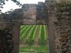 Riquewihr, vinice hned za hradbami, foto: Petr Nejedlý
