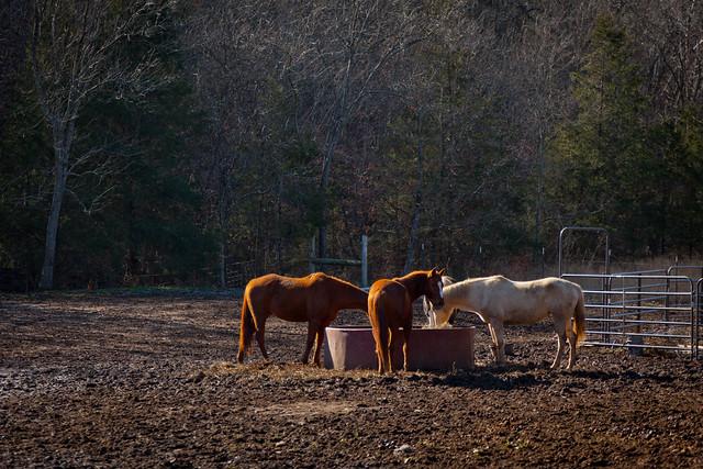 Horses 9804