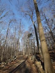 日, 2011-12-25 12:55 - 1777 trail