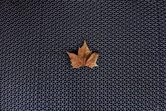 Leaf on Ground Pattern