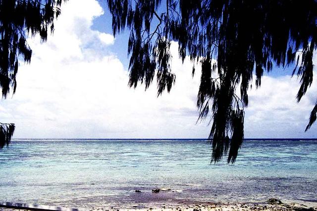 Heron Island - the reef