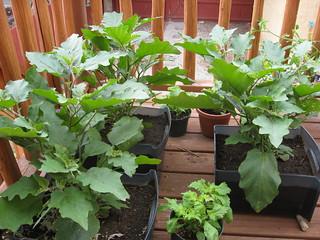 Gardening | by taylorandayumi