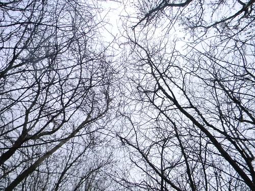 Crazed sky Eynsford Circular