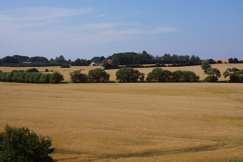 Kaedeby-Haver-2014-07-24 (18)