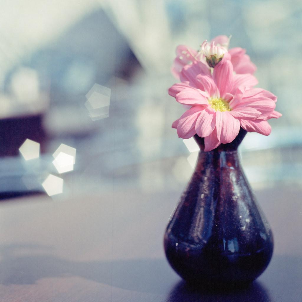 Modest Bouquet by christian.senger