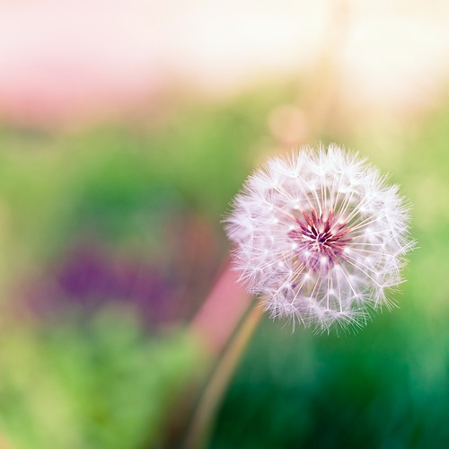 flower | by ►CubaGallery