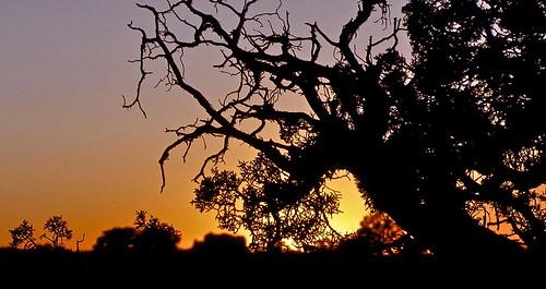 silhouette sunrise canyonlandsnationalpark cottonwood canyonlands sunriseinthecottonwoodandtamariskbesidethecoloradoriver