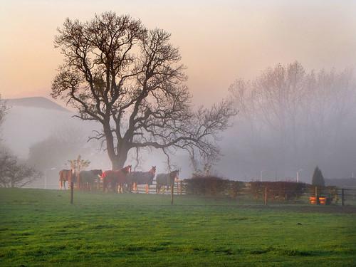 horses mist sunrise canon greatayton pd1001 greatbroughton sx10is pauldowning