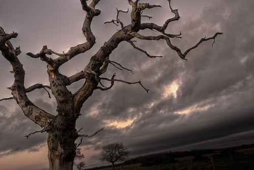 winter sunset sky cloud tree field dark landscape dead branch dusk farm 5d 1740mm hdr canon1740f4lusm mygearandme