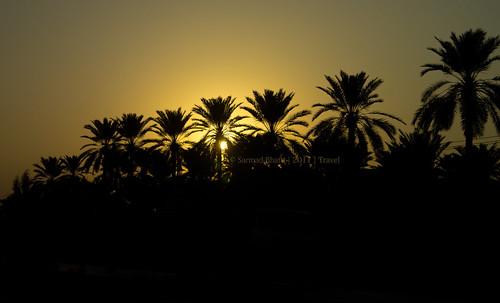 travel trees sunset orange sun yellow palms date sindh nha khairpur nationalhighway