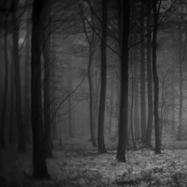 Forest IV (edit)