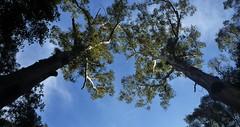 Canopy View Forest Island Bushwalk - Royal National Park Sydney
