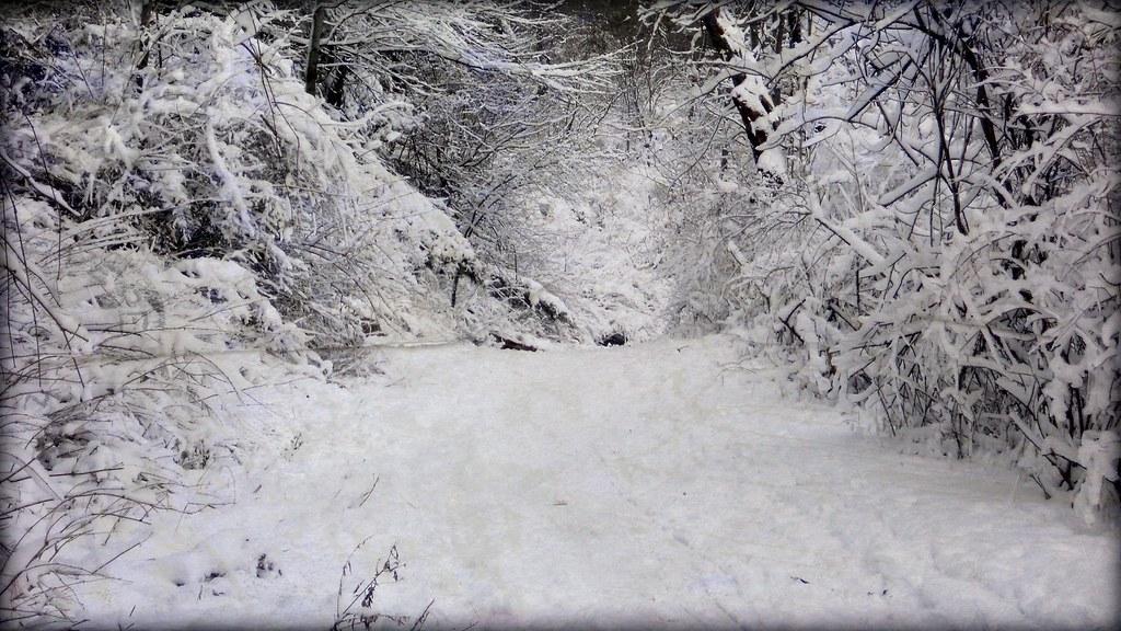 World of White - winter snow