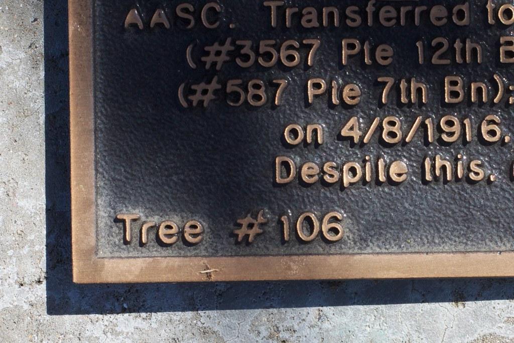 Tree #106