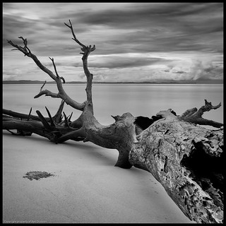 Red Beach Stump