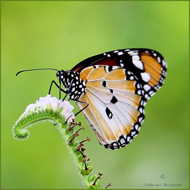 Life is Like a Beautiful Melody .....