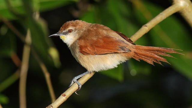 obvious bird names
