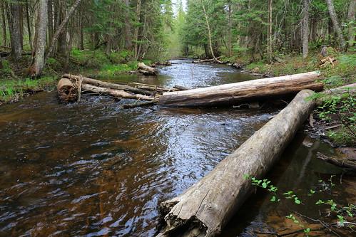 up creek forest spring woods stream may upperpeninsula uppermichigan troutstream hiawathanationalforest deltacountymi haymeadowcreektrail canonsl1 michigantroutstream