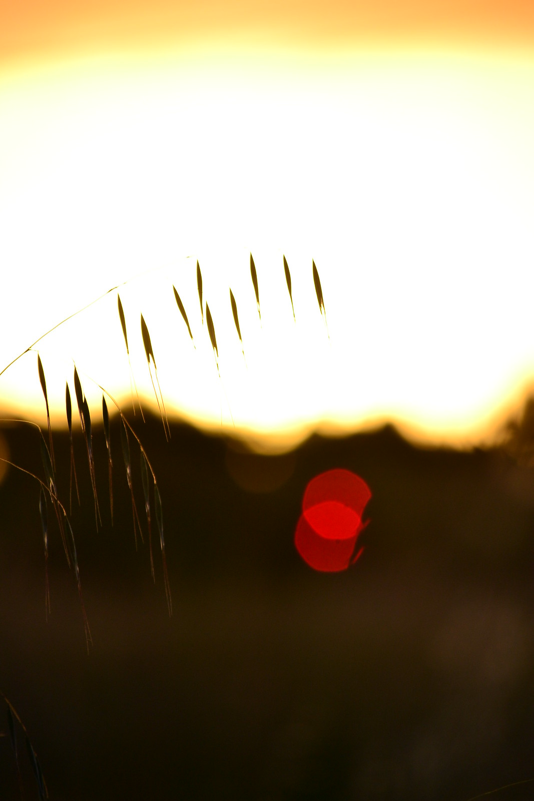 Grass by Jarle D