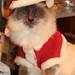 Santa Paws (1/365)