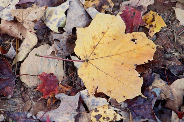 Hojas caídas de otoño