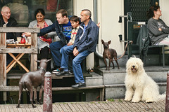the dog community (including plastic dog)