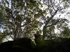 Steve Crombie - Forest Island Bushwalk - Royal National Park Sydney